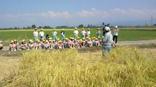 学校田稲刈り (2).jpg