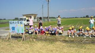 学校田稲刈り (3).jpg